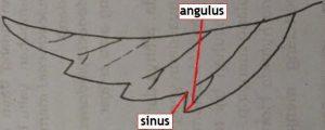 Angulus dan sinus