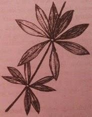 tipe-daun